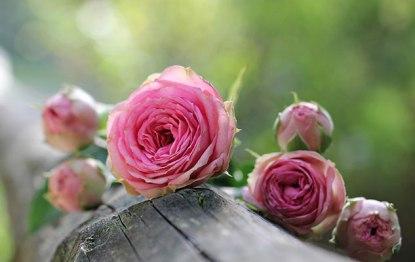 festa-delle-rose-venaria-2018